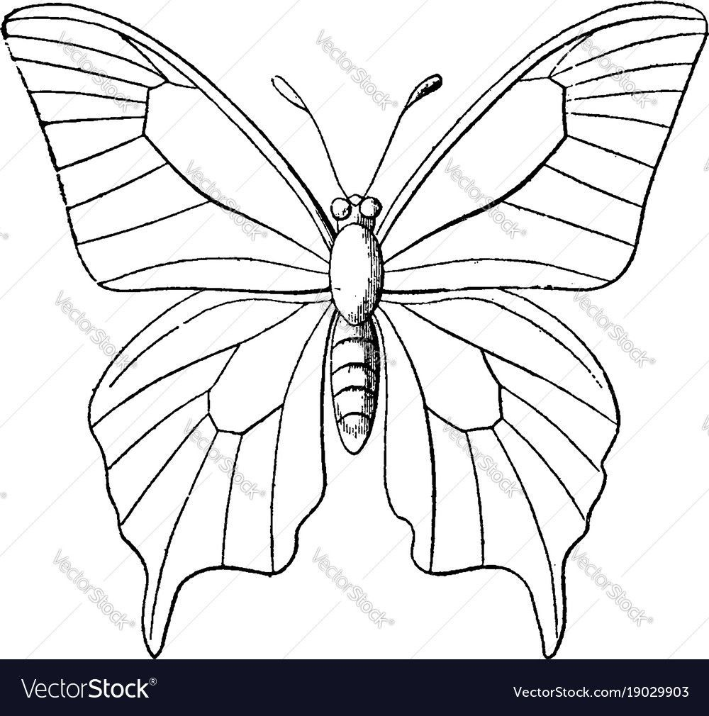 Drawing Easydrawing Butterfly Coloring Page Butterfly Outline Butterfly Painting [ 1010 x 1000 Pixel ]
