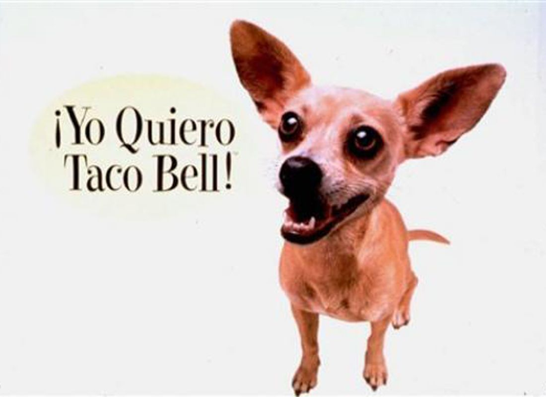 Yo Quiero Taco Bell Chihuahua Selling Eating With Images My
