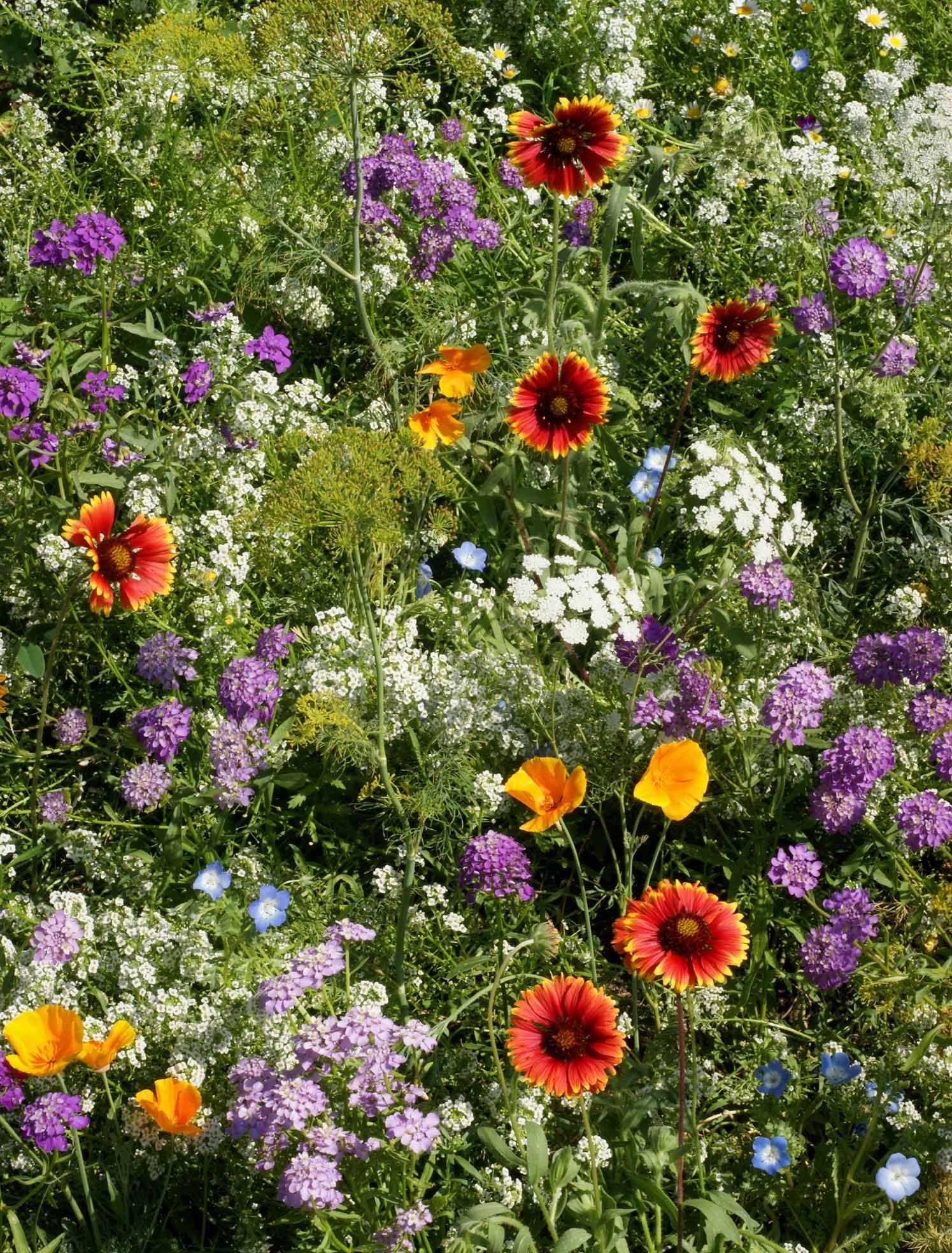 Ohio Wildflower Landscape Photos Alternative Lawn Mix Beneficial
