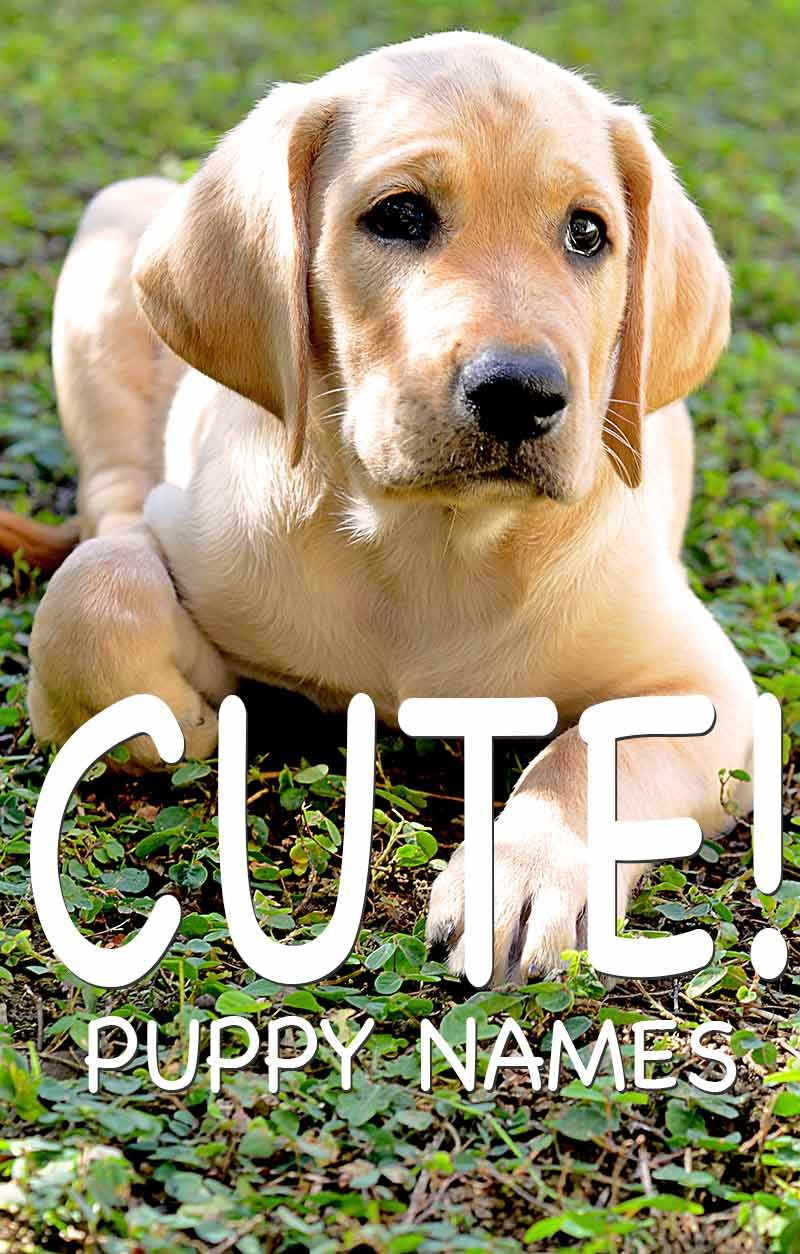 Cute Dog Names Over 200 Adorable Names For Boy And Girl Puppies