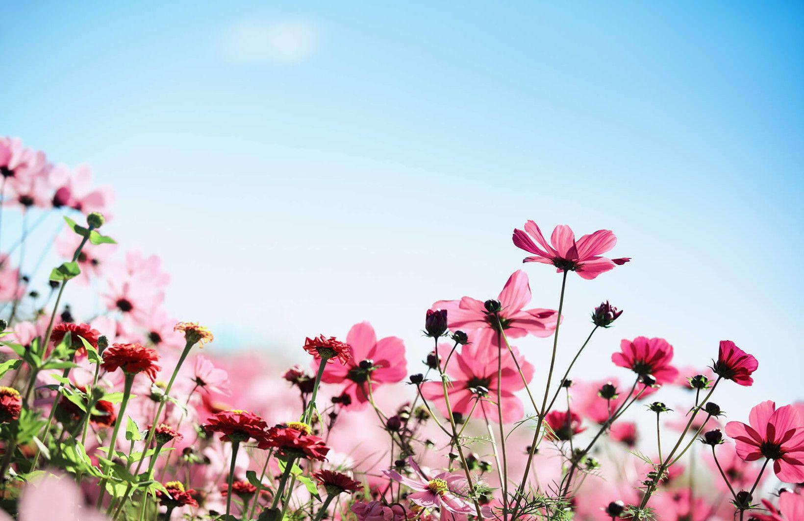 Sunlit Pink Blossom Wallpaper Mural Flower wallpaper