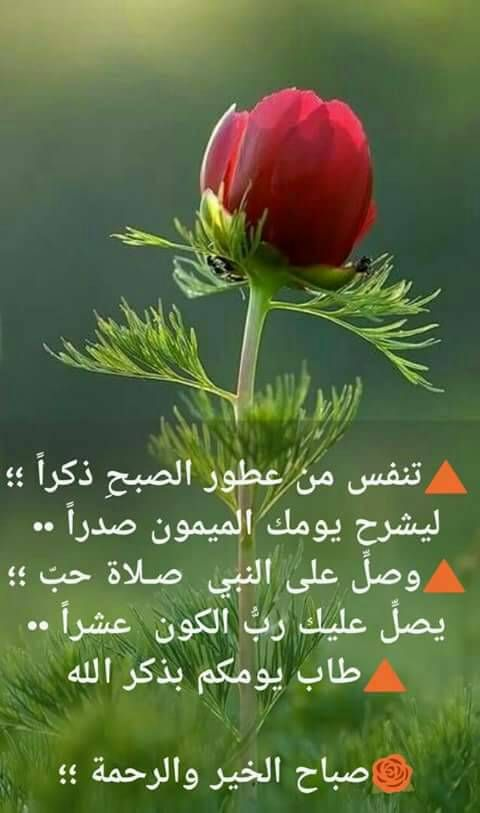 أصبحنا وأصبح الملك لله رب العالمين Good Morning Quotes Good Morning Arabic Good Morning Gif Images