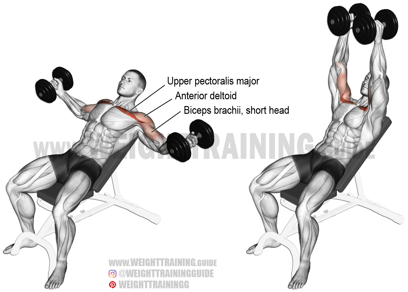 Incline dumbbell fly. An isolation exercise. Target muscle: Upper ...