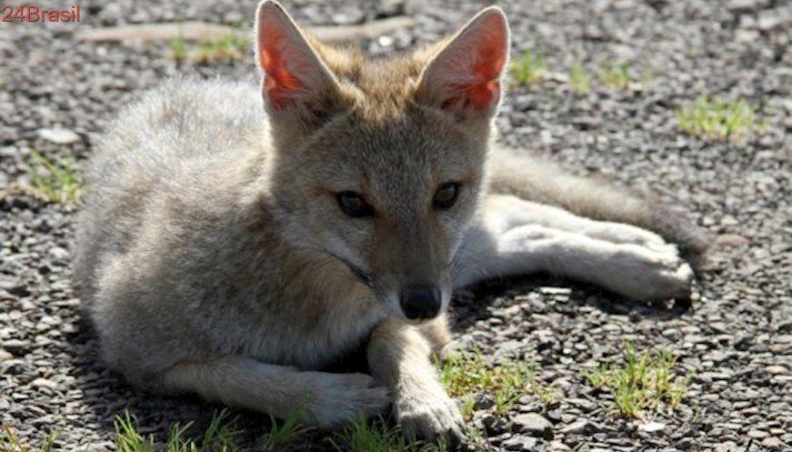 Animais Sao Ameacados Pelo Trafico No Rio Grande Do Sul Animais