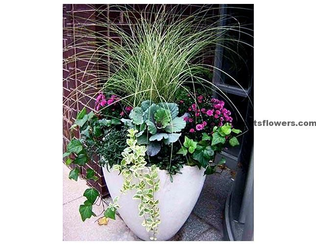 Pinterest Flower Pot Ideas And Winter Container Gardening Potted Plants Outdoor Container Flowers
