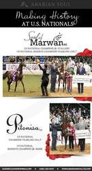 Arabian Horse - History is Made - Arabian Soul Partners - US Nationals 2014 - Pitonisa AS - Soul of Marwan AS