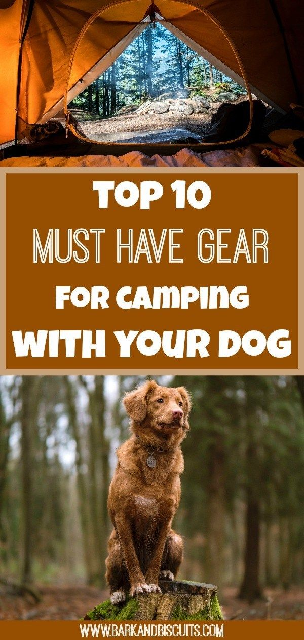 Photo of Camping With Dogs – Top 10 Must-Have Gear