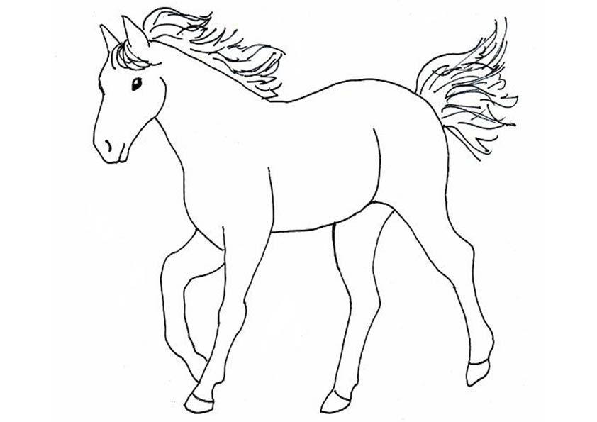 pferde10  malvorlagen pferde ausmalbilder pferde