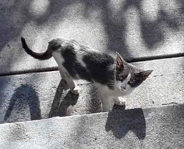 Stray Kitten Wanders the Neighborhood Alone Until She