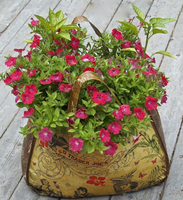 Gorgeous Flowering Container Garden Plants that Love Sun Gardens