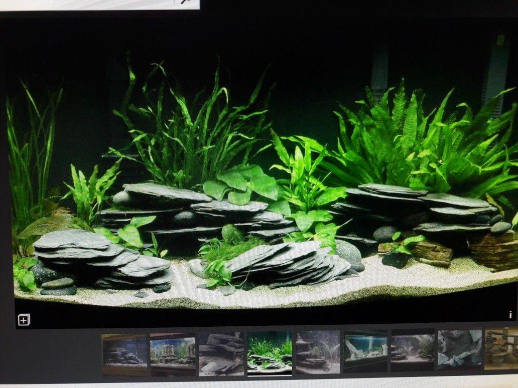 Schiefer Aquarium Susswasseraquarium Aquarium Einrichten