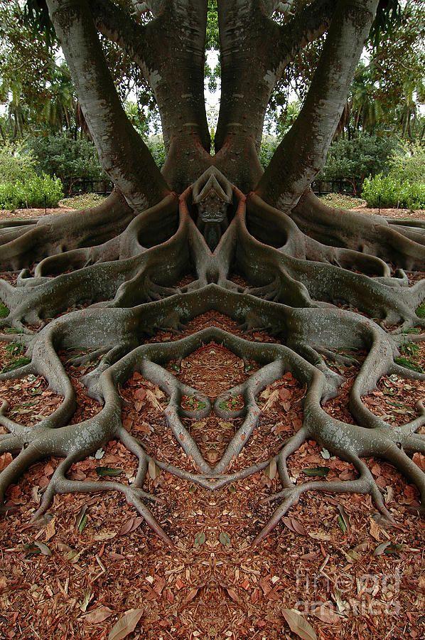 photo en vis vis fees lutin monde enchant pinterest vis photos et arbres tranges. Black Bedroom Furniture Sets. Home Design Ideas