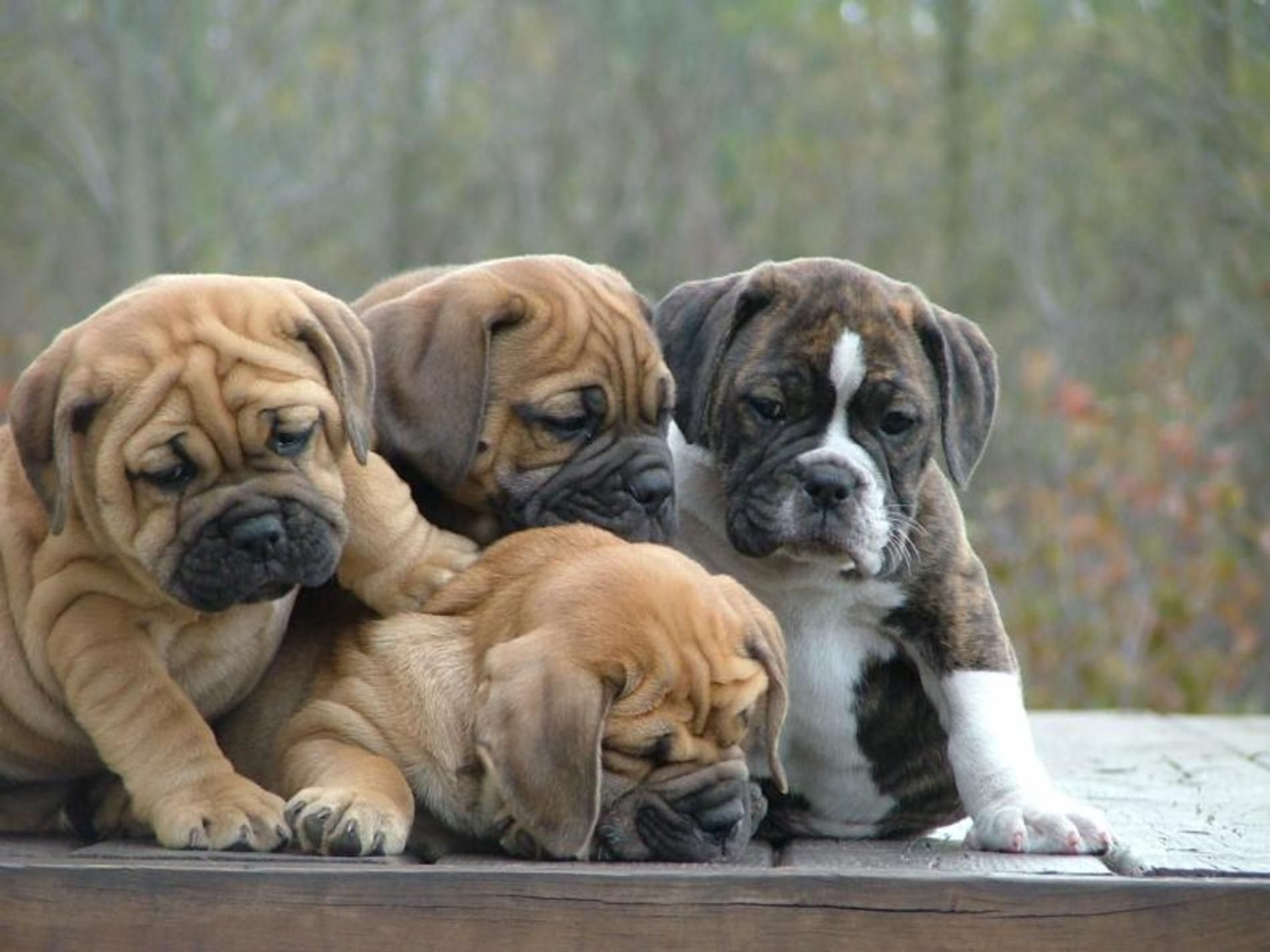 Baby animals photos baby animals ny daily news - Find This Pin And More On Animals By Christineathaye