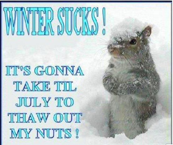 More Tired In Winter Even The Critters Are Tired Of Snow Quotes