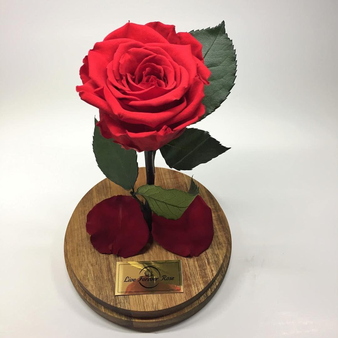 A tiny present that will make your love happy liveforeverrose a tiny present that will make your love happy liveforeverrose beautyandthebeast infinityroses izmirmasajfo