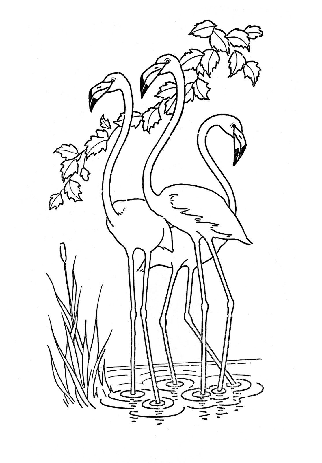 Nature Coloring Pages For Kids Printable Flamingo