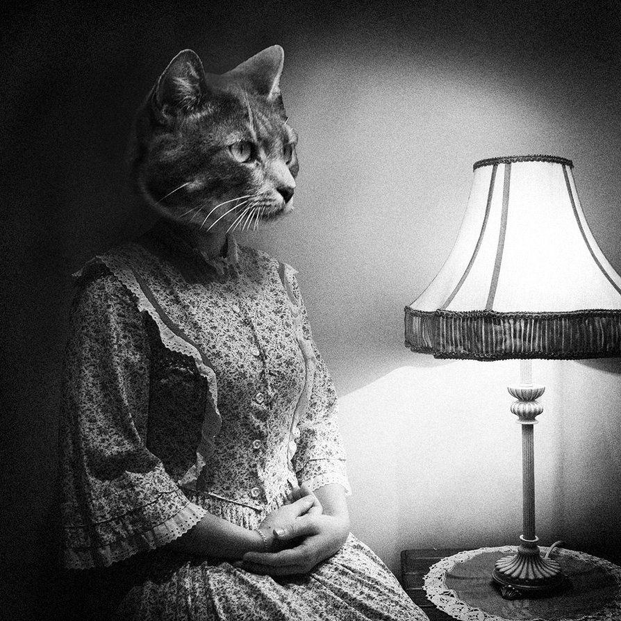 2af154cf Crazy Cat Lady by tasha-jade on DeviantArt | ☺Funny, Fun Humor ...