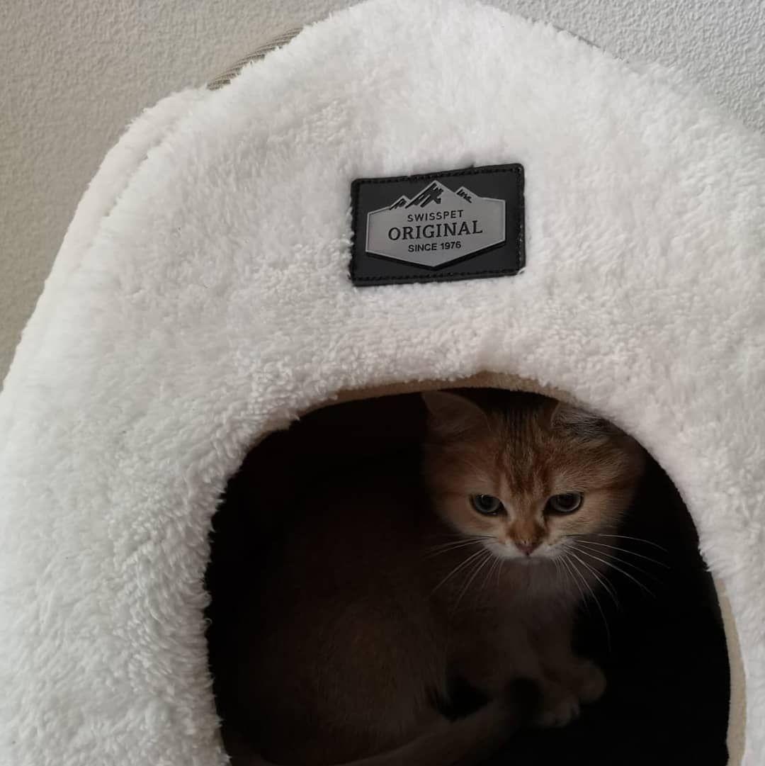 He Loves His Swisspet House Catsofinstagram Catsoftheweek Catpaws Catworld Catsoftheworld Catsofswitzerland Briti Pet Accessories Pet O Cat Paws