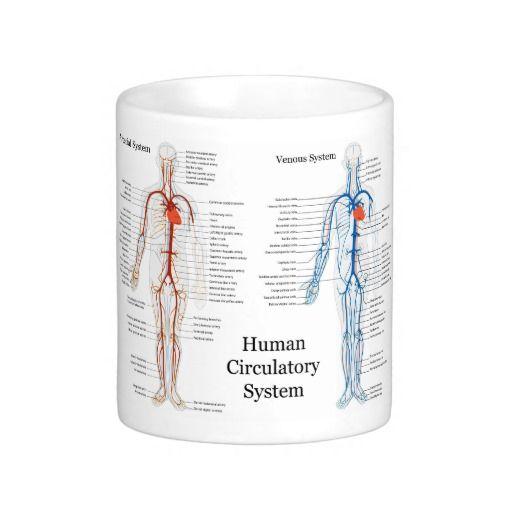 Sistema circulatório humano das artérias e das