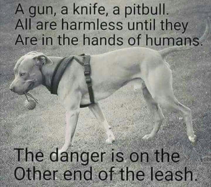 Soooo true...humans cant be trusted...🐶😭🐶😭 | Pitbull ...