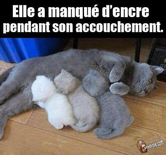 Elle A Manque D Encre Photo Chat Photo De Chaton Image Drole Animaux