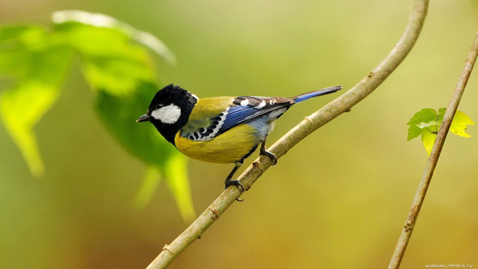 Birds Wallpapers Collection For Free Download | HD ...