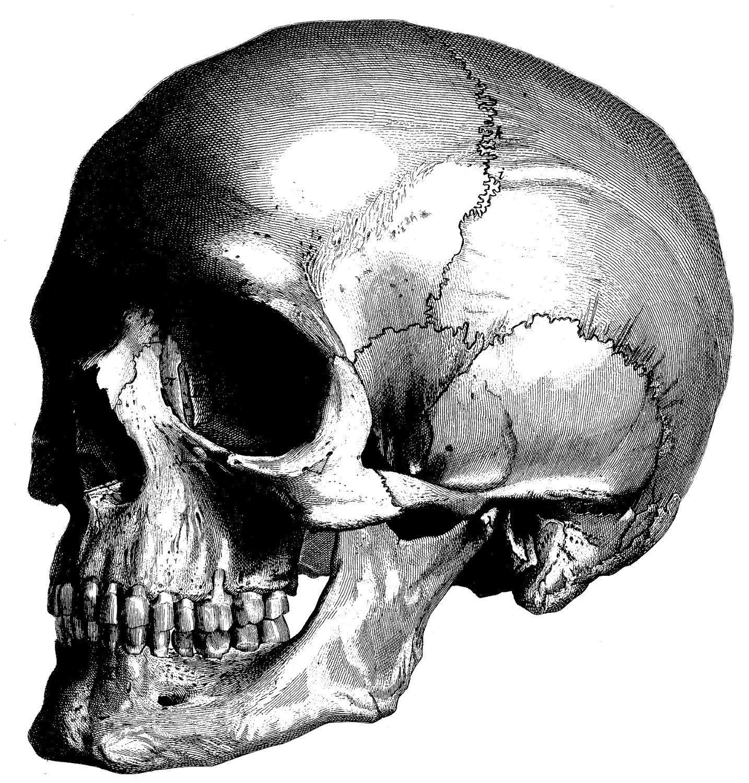 картинки черепа со всех сторон ивана