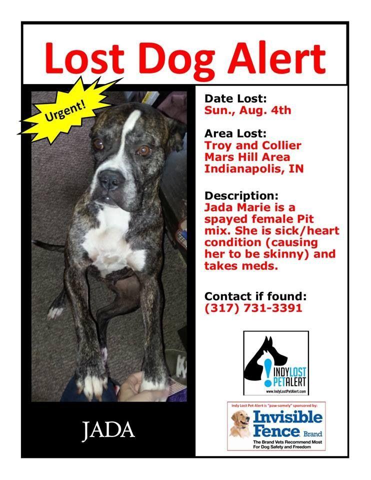 Indianapolis In Mars Hill Area Lostdog 8 4 13 Female Bull Terrier Mix Https Www Facebook Com Indylostpetalert Losing A Dog Losing A Pet Bull Terrier Mix