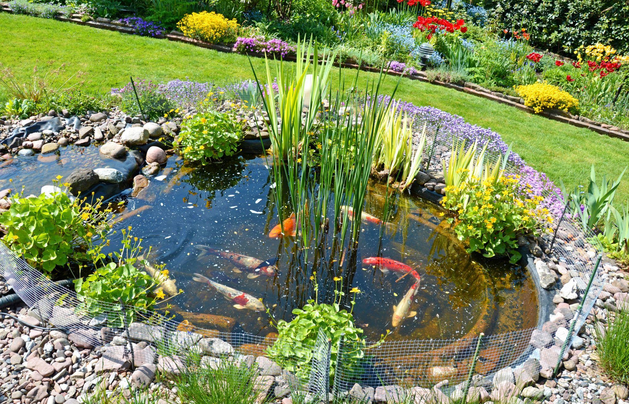 22++ Photos bassin de jardin pour poisson ideas