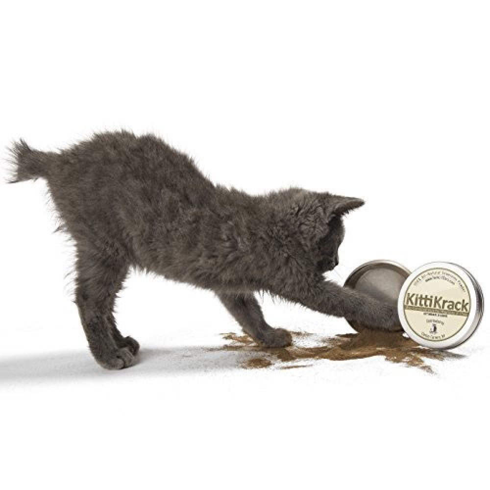 Pin By Trucni On Catnip In 2020 Cats And Kittens Cat Day Cat Behavior