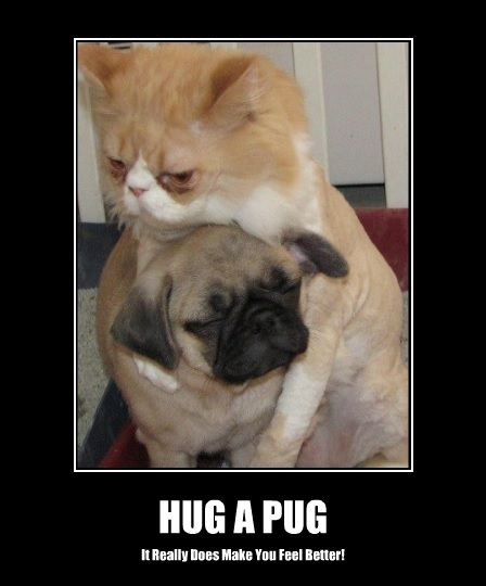 Funny Pug Dog Meme Pun LOL | Pugs | Pugs, Cute pugs, Dogs