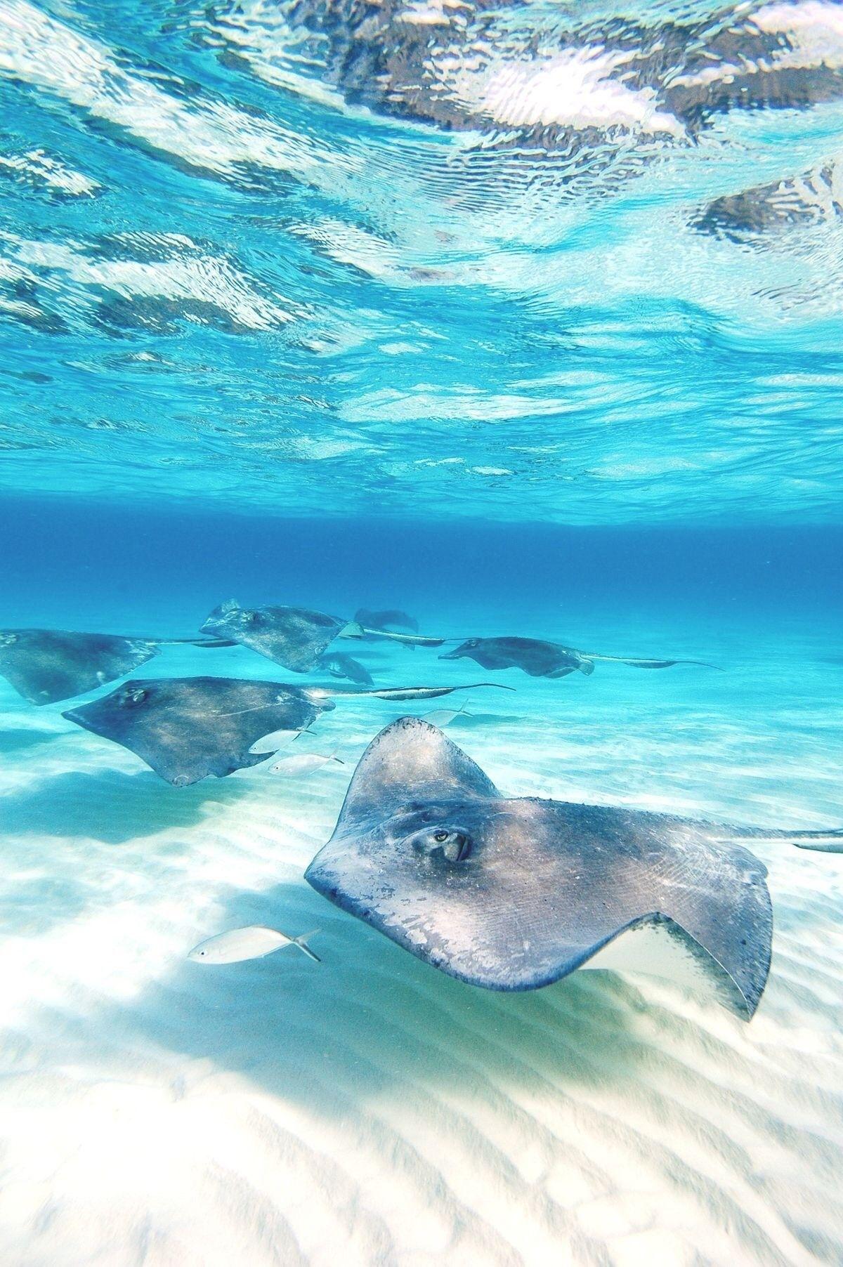 Pin De Brenda B En Ocean Animáles De Océano Animales Marinos Mundo Marino