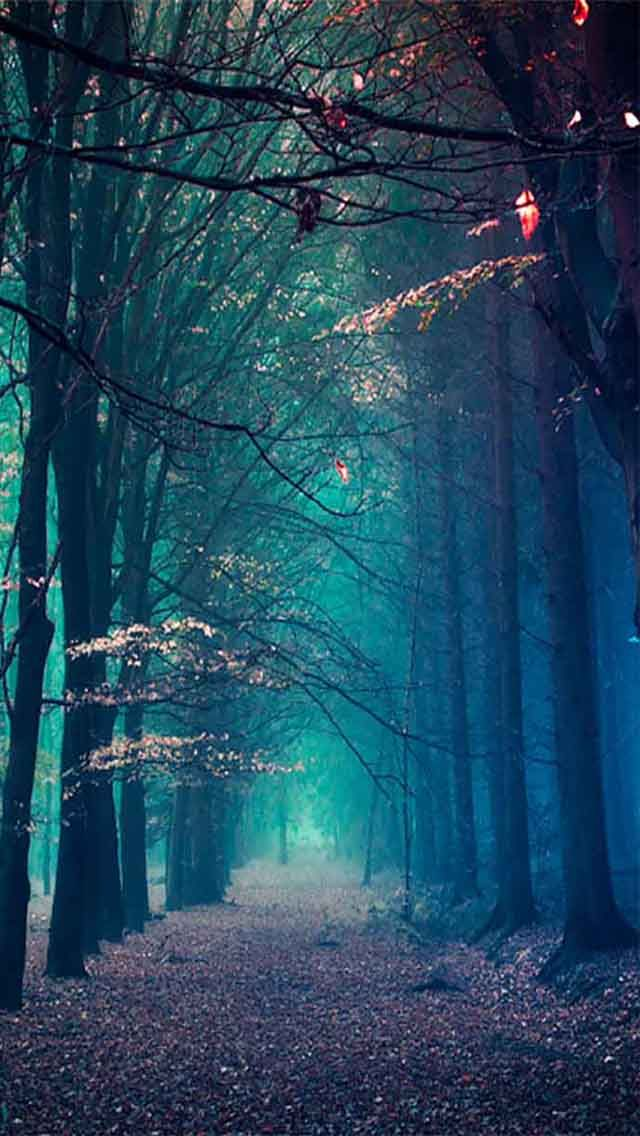 Blue Forest 15 Beautiful Scenery Photography Iphone Wallpapers