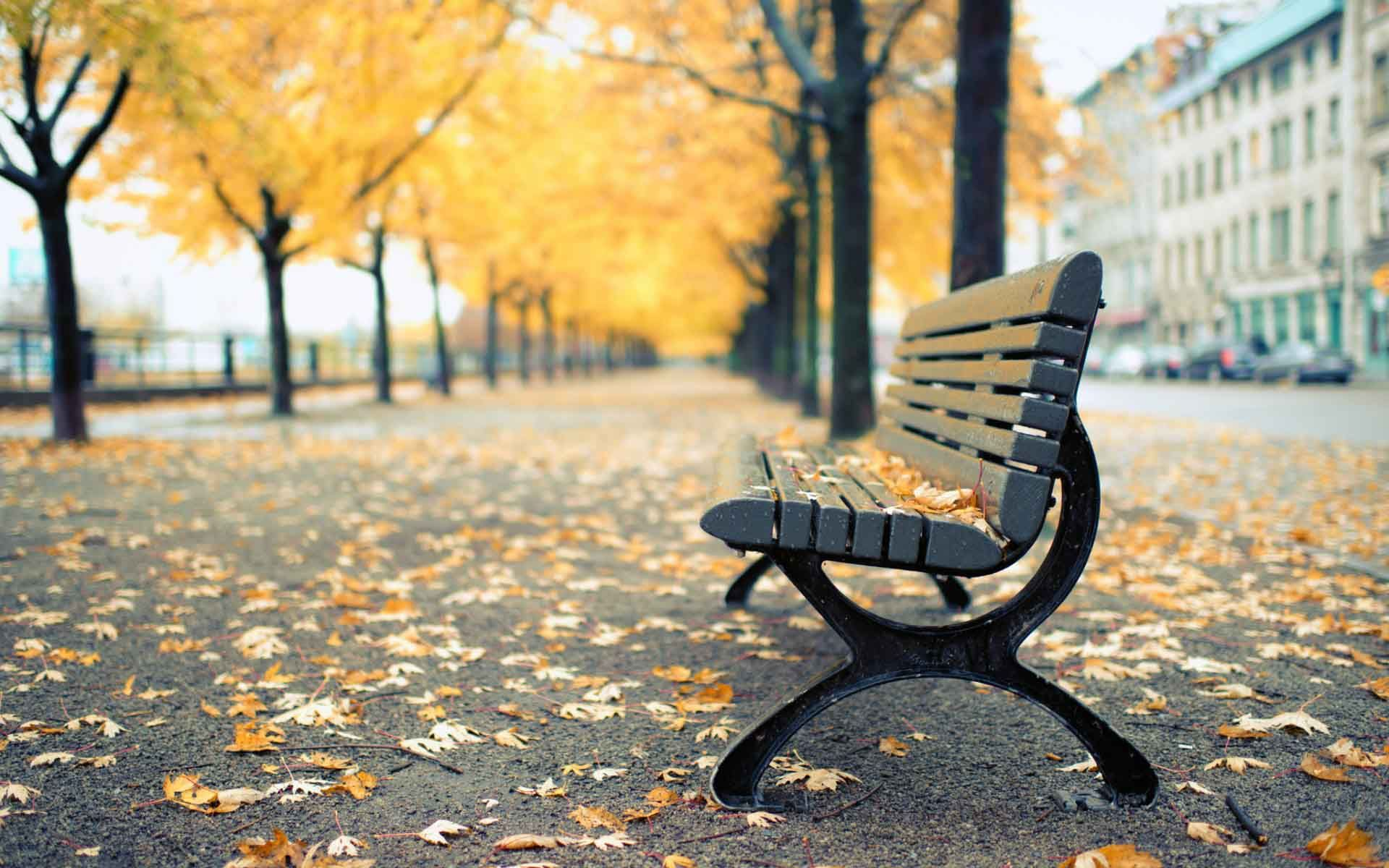 Bench In Park Hd Wallpaper Free Download Places To Visit Park