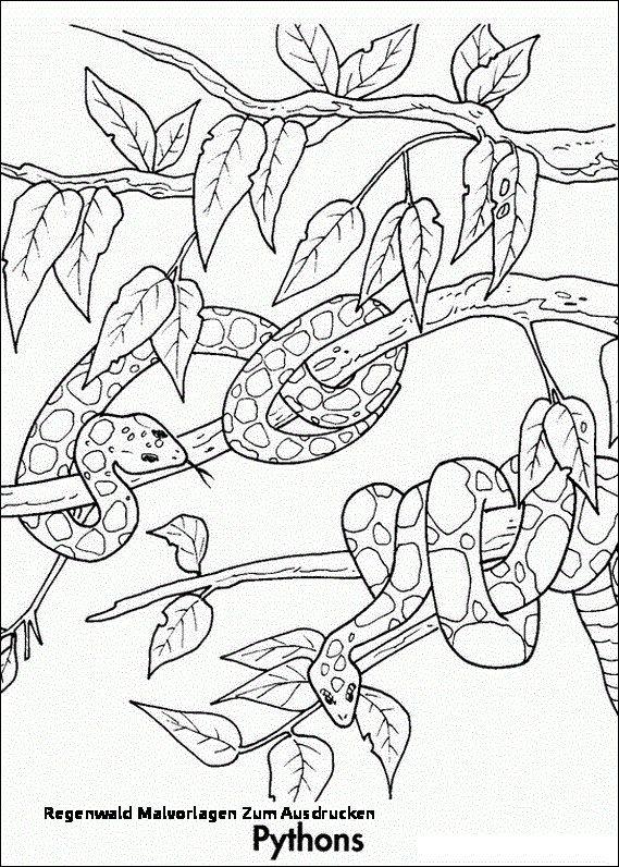 24 regenwald malvorlagen zum ausdrucken  disney