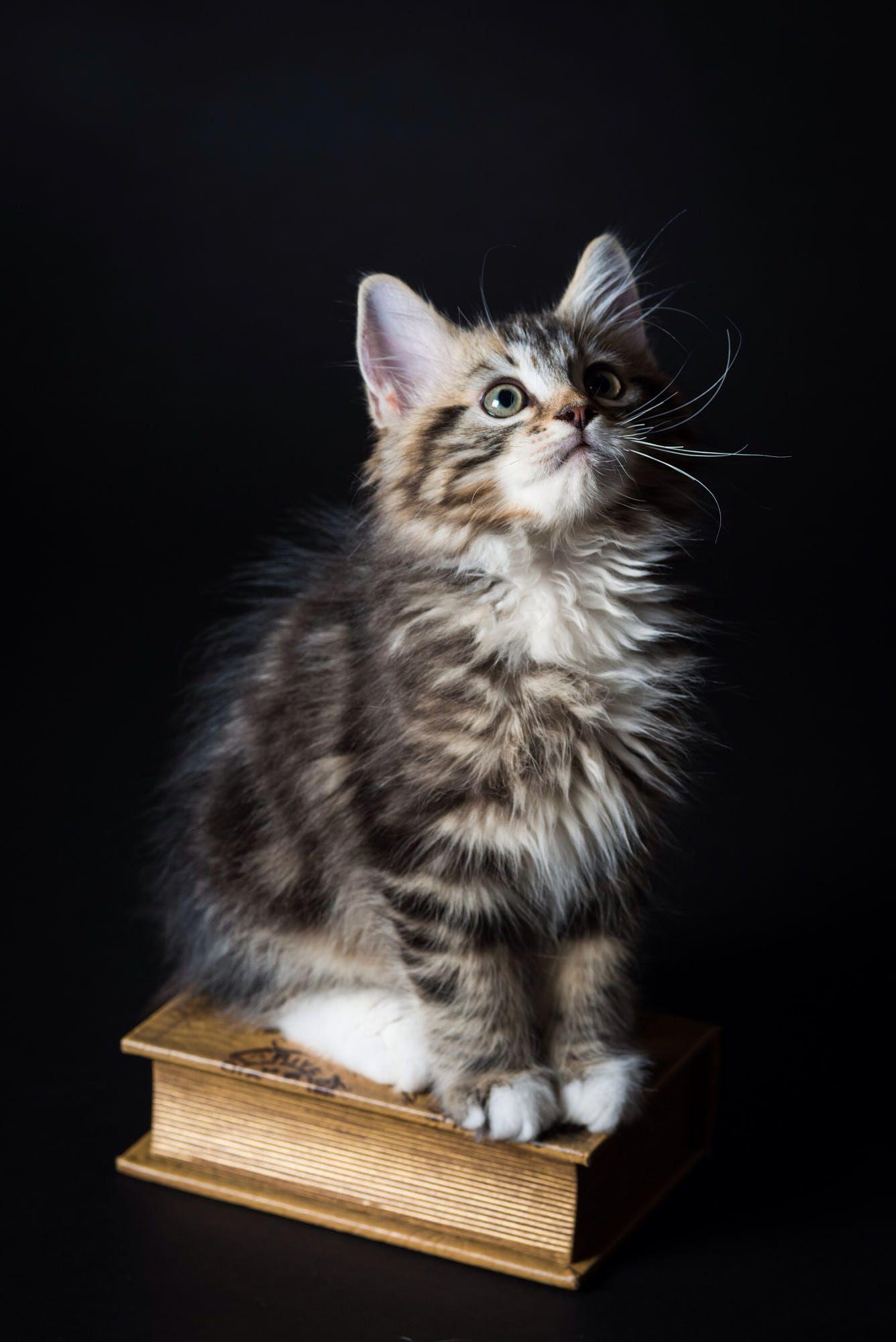 Cat by Ryuichi Miyazaki Cats, Pretty cats, Cute cats