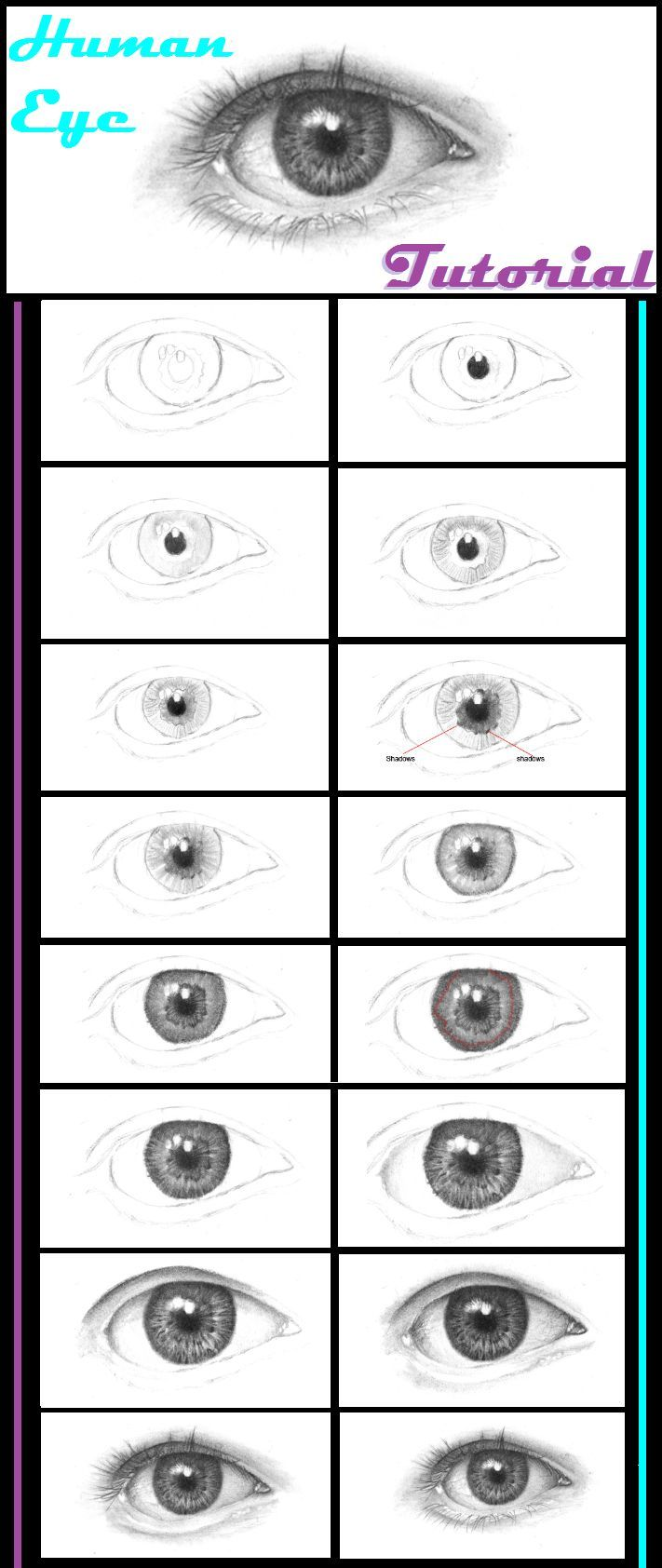 How to draw human eyes step by step.