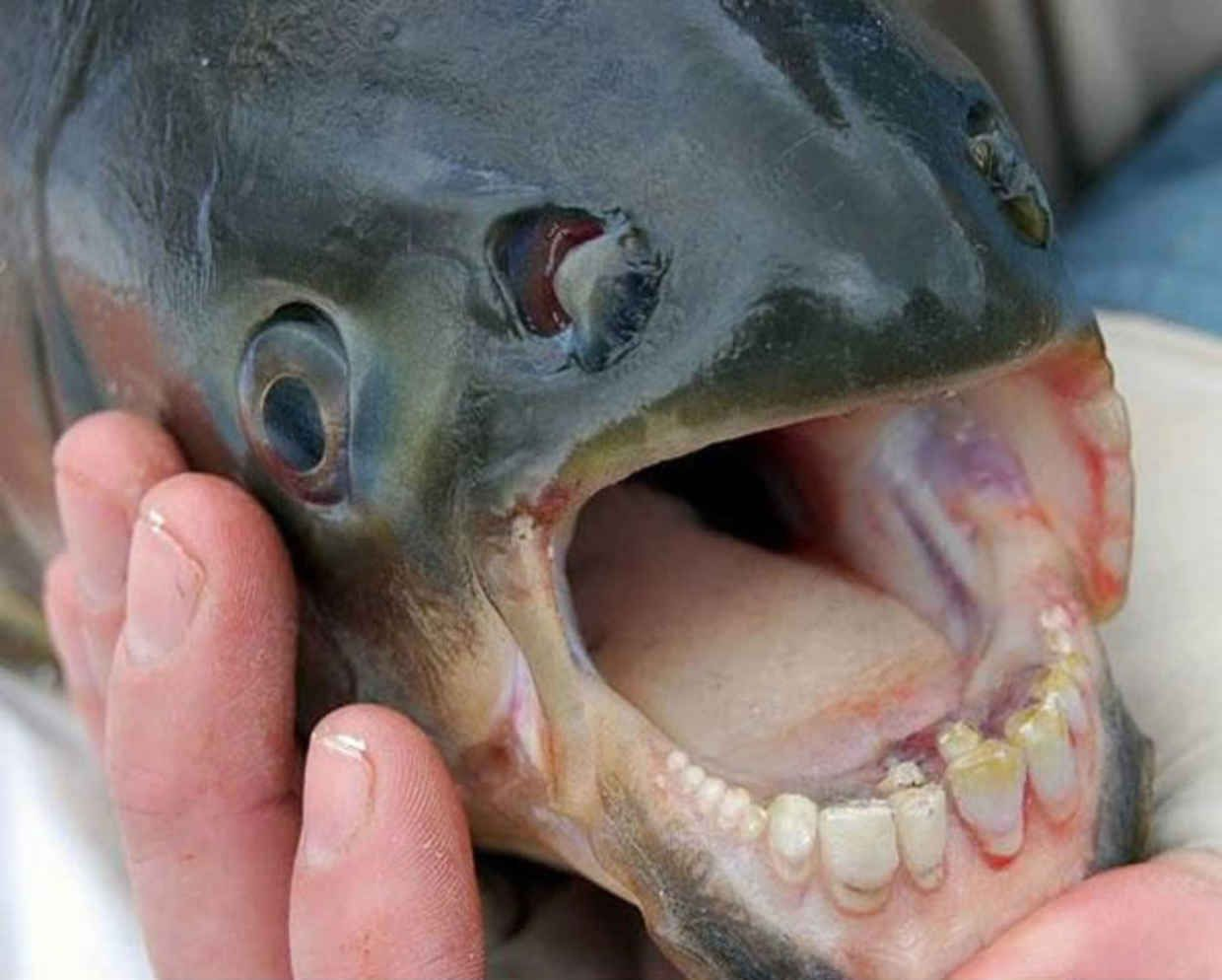 Terrifying Strange Animals That You Didnt Even Know Existed - 18 terrifying strange animals didnt even know existed