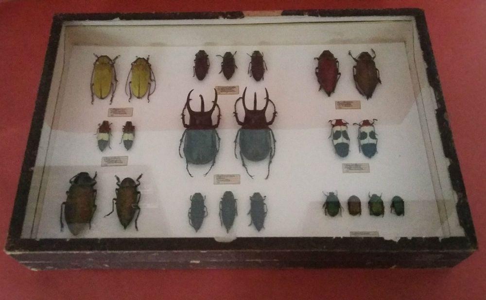 Histoire naturelle vieille bo te deyrolle collection d - Boite a insecte ...