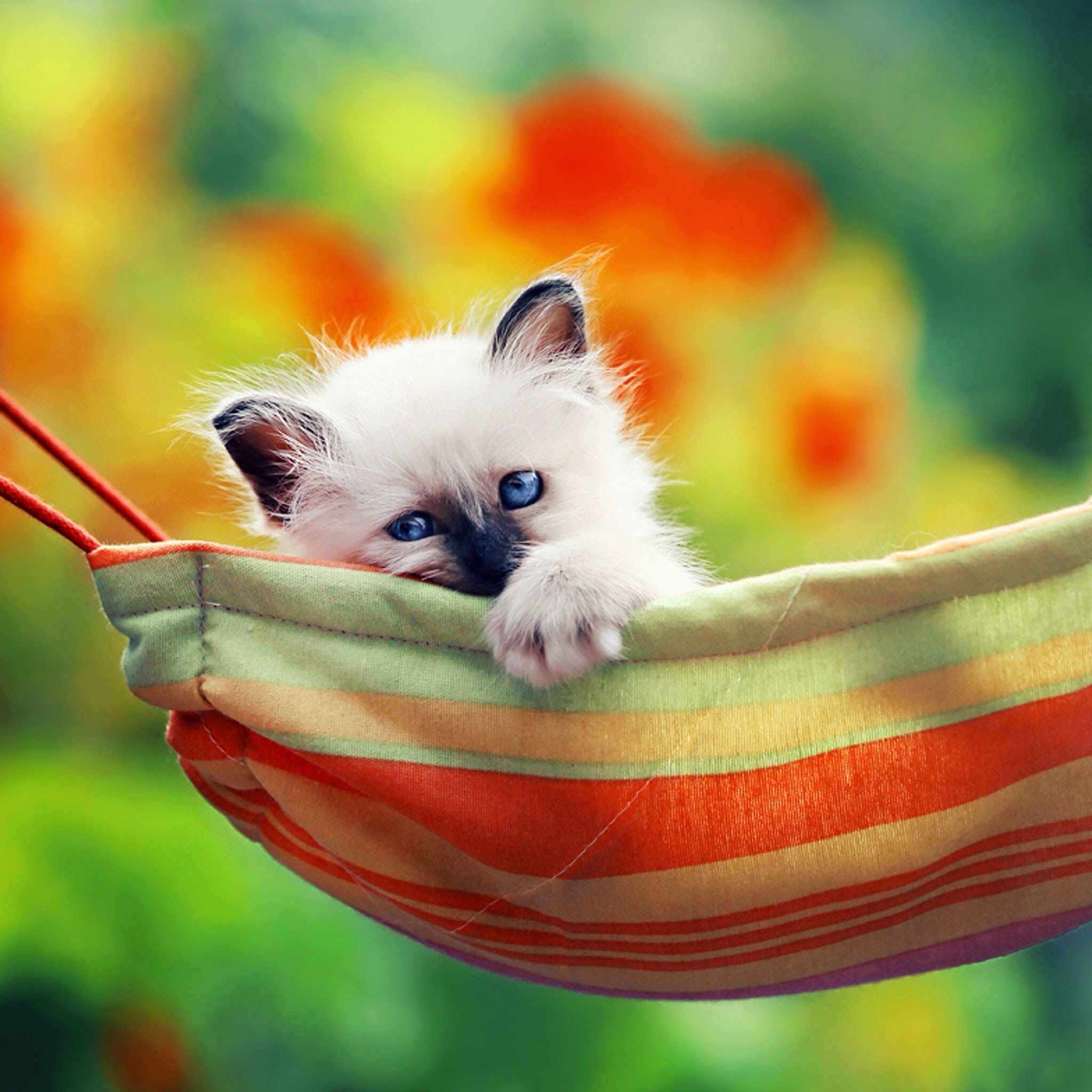 Such a sweet baby in her cat hammock...