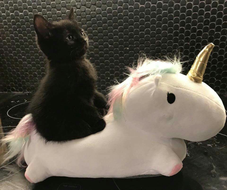 A Black Kitten Riding A Unicorn Yes Please P M Cats And