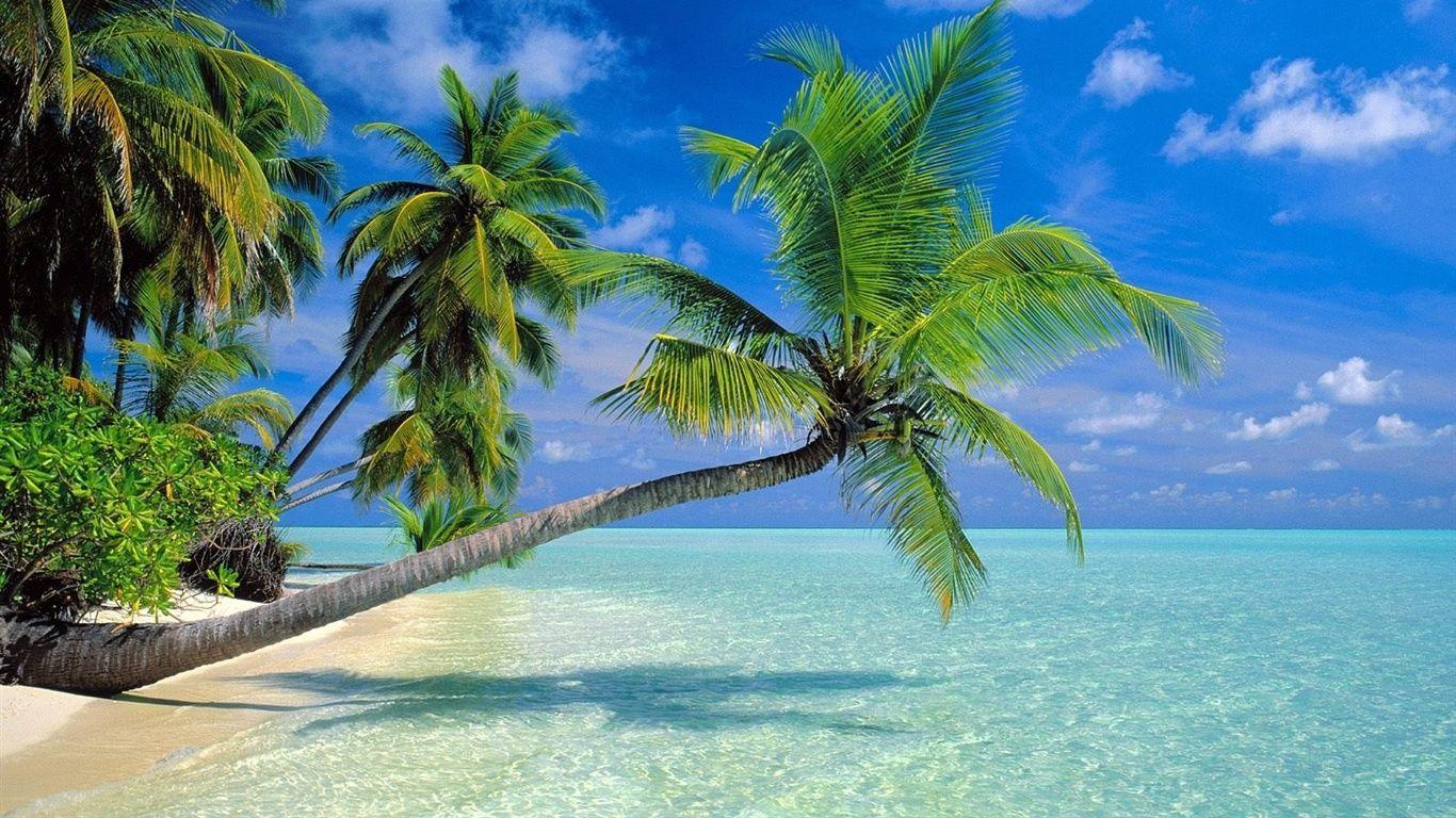 Coconut Trees Beach Wallpaper Beautiful Beaches Beach Wallpaper Most Beautiful Beaches