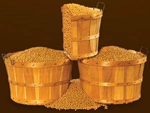 Soybeans Are Mainly Grown In The Mid West A Bushel Of Soybeans