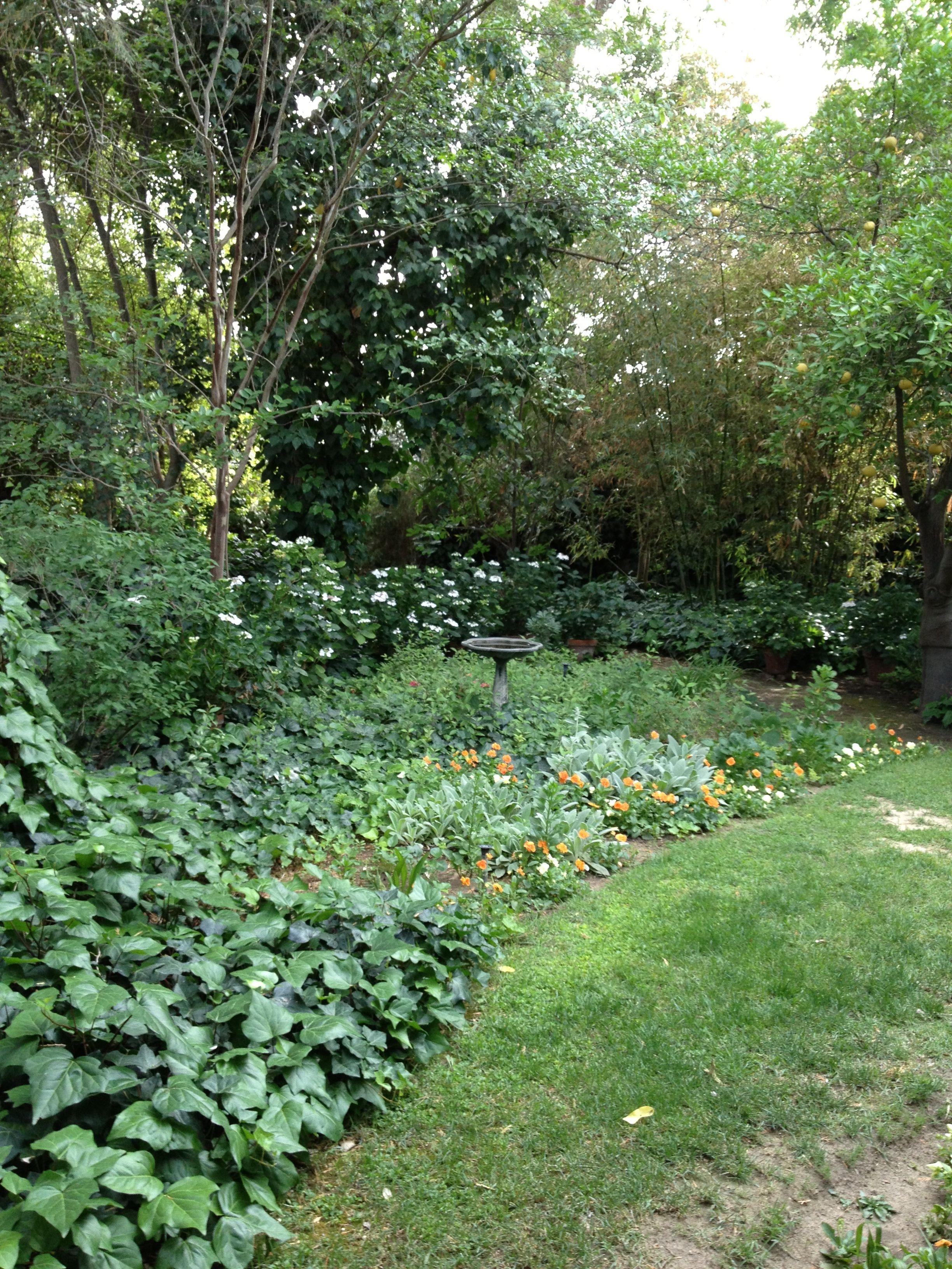 Bird Bath And Hydrangeas