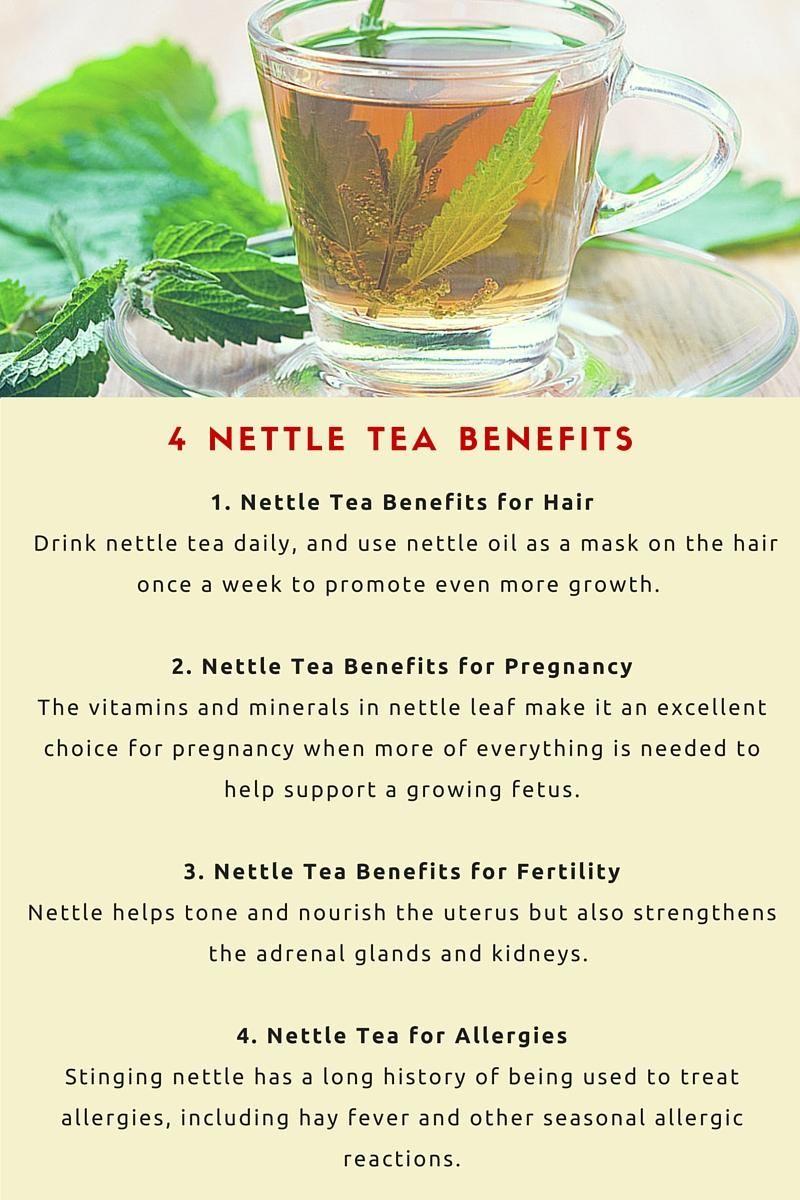 4 Amazing Nettle Tea Benefits Healthy Stuff Tea Benefits