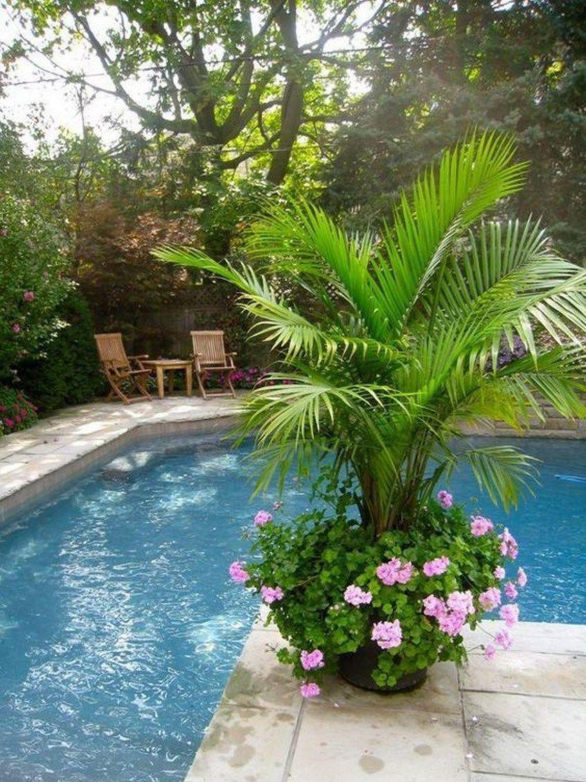 ✔ 25 suitable plants grow beside swimming pool 17