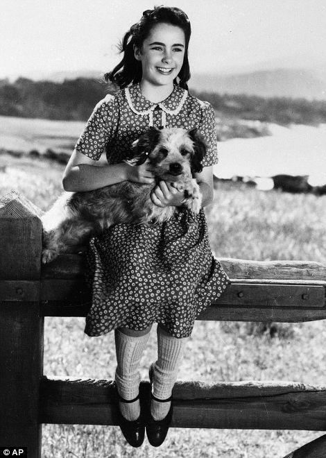 National Velvet To A National Treasure Elizabeth Taylor A Life In Pictures Elizabeth Taylor Young Elizabeth Taylor Taylor