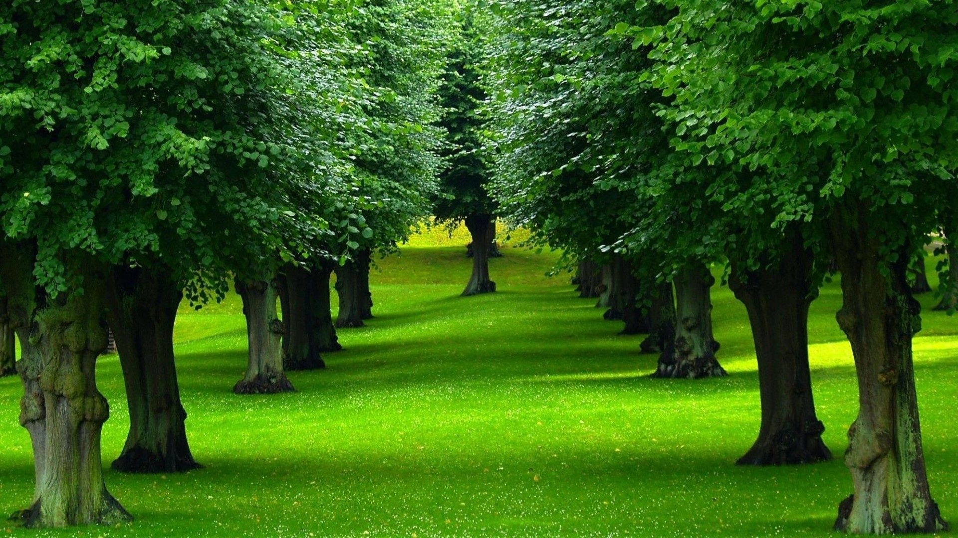 Trees Tree Surgeons Green Trees Tree Wallpaper