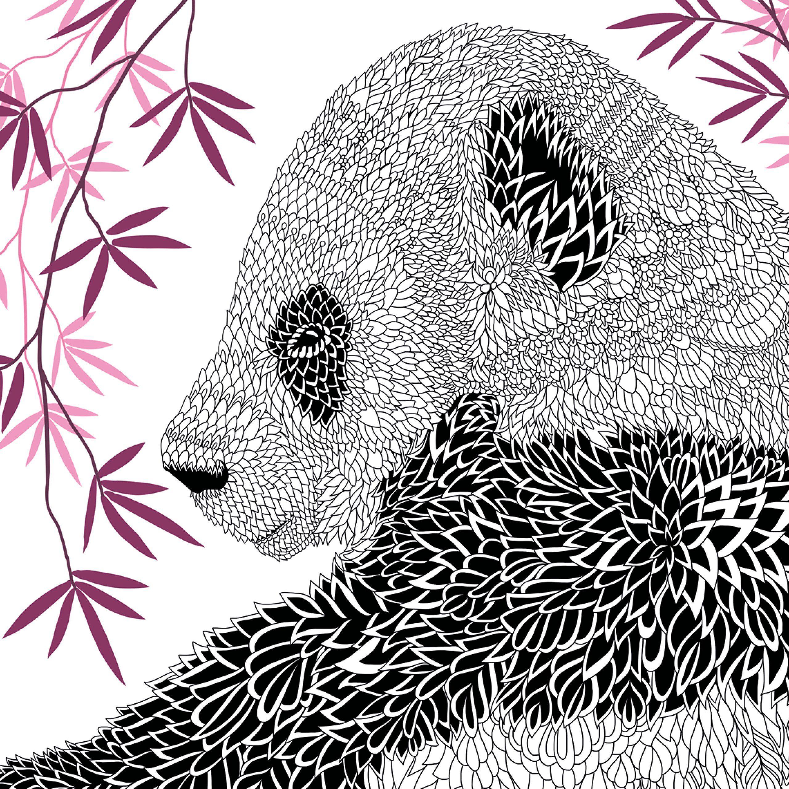 Amazon.com: El zoo: Animal Portraits a color (9781438008509 ...
