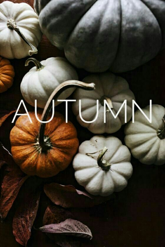 autumn pumpkin fall wallpaper background iphone